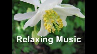 Relaxing Music Sleep Meditation Deep Sleeping Calm Peaceful Zen Relax Stress Relief