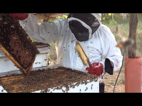 Kenya: How to be a successful Beekeeper - Prof Miriam Kindiki
