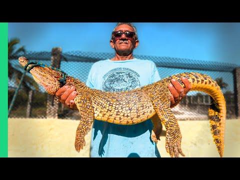 Cuba's Scariest Food!! Dangerous Crocodile Catch and Cook!!!