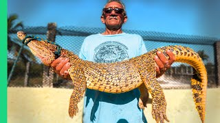 Cuba's Secret Meat Obsession!! Dangerous Crocodile Catch and Cook!!!
