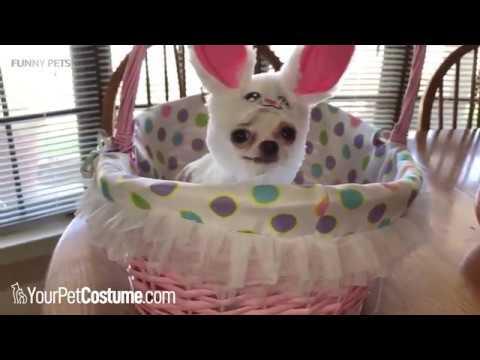 Funny Animals in Halloween Costumes 2018 ★ PETS in HALLOWEEN COSTUMES