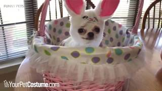 Funny Animals in Halloween Costumes 2018 ★ PETS in HALLOWEEN COSTUMES
