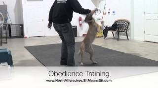 Obedience Training With Tug