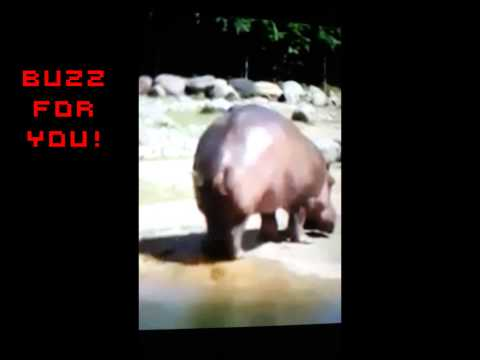 Buzz For You-Le Pet le plus long du monde!!
