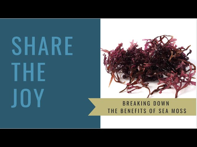 Share the Joy #149 The Benefits of Sea Moss