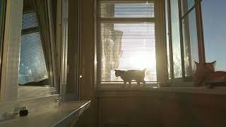 Кошки на балконе 😊