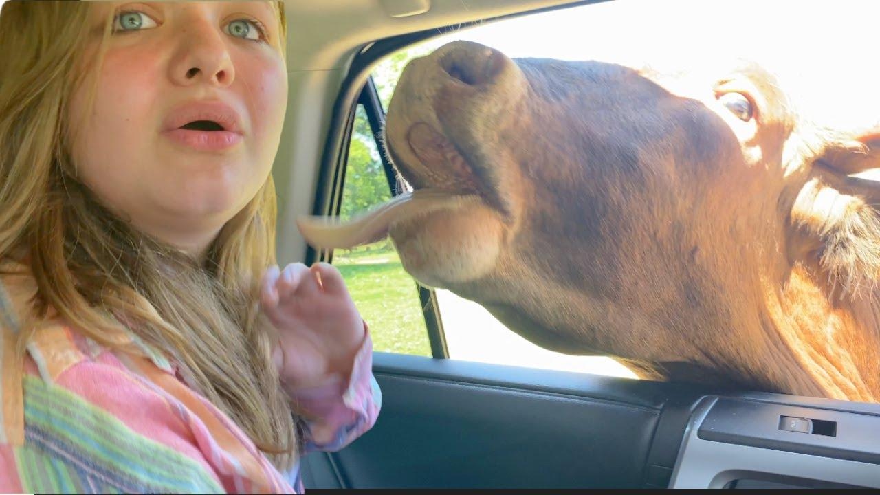 AUBREY GETS ATTACKED by ANIMALS!! DRIVE-THRU ANIMAL SAFARI GONE WRONG!