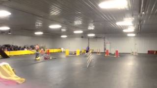 Packerland Kennel Club Of Green Bay - Agility Classes