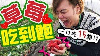 Ryu的大嘴巴可以一次塞15顆草莓?🍓日本農園草莓任摘吃到飽。【いちご狩り】
