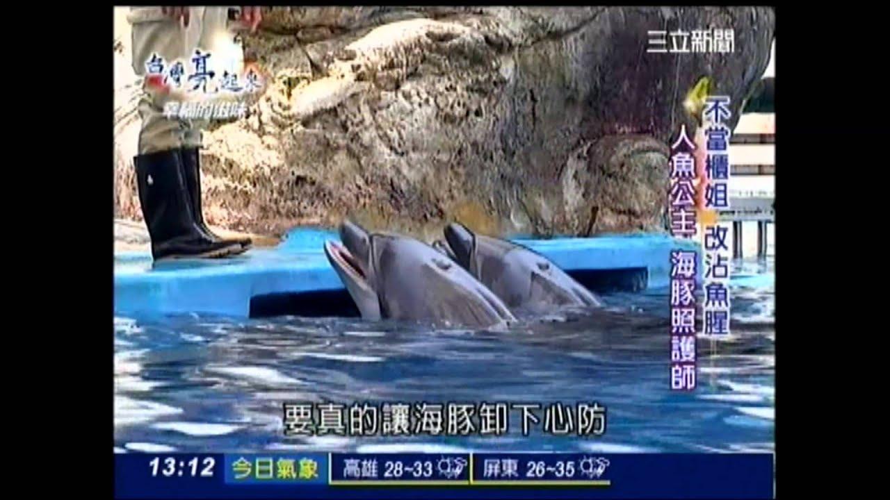 三立電視臺CH54 臺灣亮起來~不當櫃姐 改沾魚腥~人魚公主 海豚照護師 黃琬琇 - YouTube