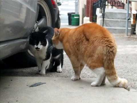 Senile Talking Cat (The Original) Part Deux