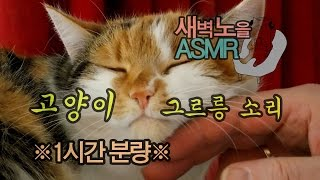고양이 골골송 그르릉 소리 1시간분량ㅣ백색소음 공부집중 불면증 수면유도 자면서 틀어주세요[Korean ASMR]