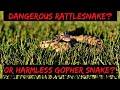 Dangerous Rattlesnake or Gopher Snake? How to tell the difference, Rattlesnake or Gopher Snake?