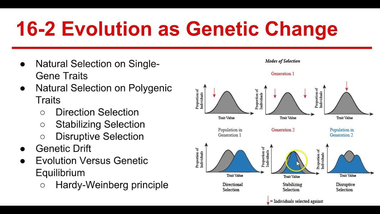 evolution in the definition of genes essay These changes are continuous and they take place over many generations  evolutionary changes in plants and animals are genetic properties,  characteristics or.