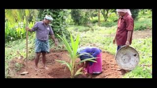 Coconut Farming  English x264