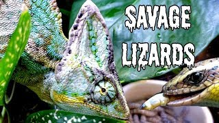 Feeding My SAVAGE LIZARD Tank! And my First GIVEAWAY!