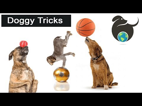 Amazing Dog Trick Compilation Video | Puppy Trick