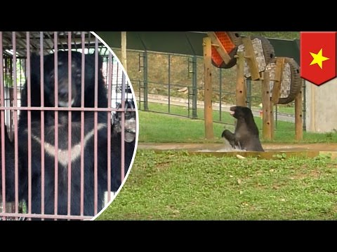 Animal rescue: happy bear rescued from cruel bear bile farm in Vietnam - TomoNews
