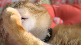 5 Minutes of a Cat Licking His Paws