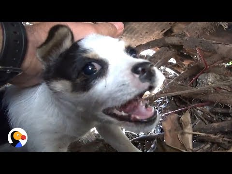 Abandoned Puppies Rescued After Two Weeks Alone The Dodo YouTube - These two stray puppies were just rescued and they refuse to stop hugging each other