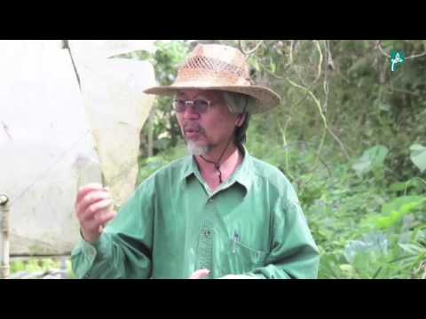 Farmer Fung: Living in Harmony with Nature