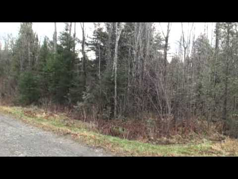 USA Maine Land For For Sale, 80 Acres, $30's Property Price MOOERS #8293