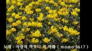 사랑의 하모니 - 야화