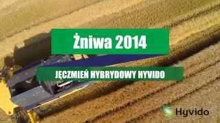 Żniwa 2014 – plonowanie jęczmienia hybrydowego Hyvido, odmiana Hobbit