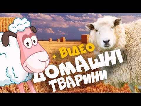 ДОМАШНІ ТВАРИНИ з відео та звуками тварин! Розвиваючі мультики для дітей українською мовою