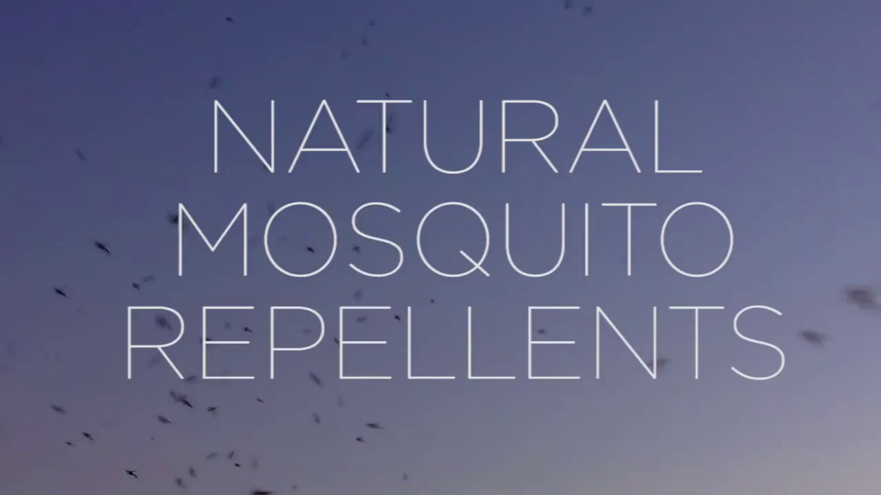 stay safe best natural mosquito repellents youtube