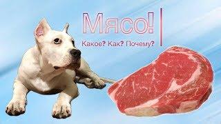 """МЯСО! Каким мясом кормить собаку? """"Собака для души"""