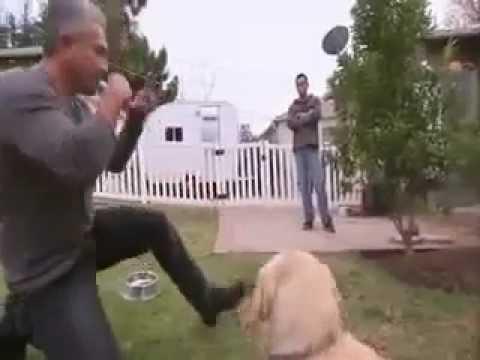 O Encantador de Cães perdeu o encanto e foi mordido :O