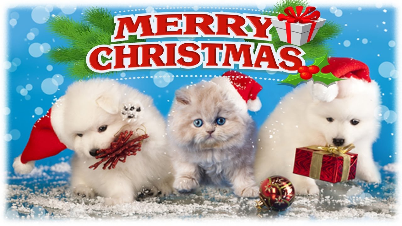 christmas kitten and puppy surprise kids opening christmas