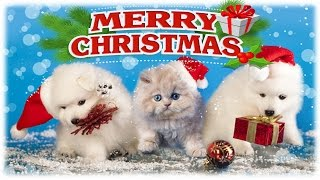 Christmas Kitten and Puppy Surprise - Kids Opening Christmas Presents Compilation 2017