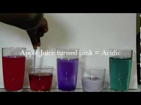 Acids And Alkalis Red Cabbage Experiment Science Fair