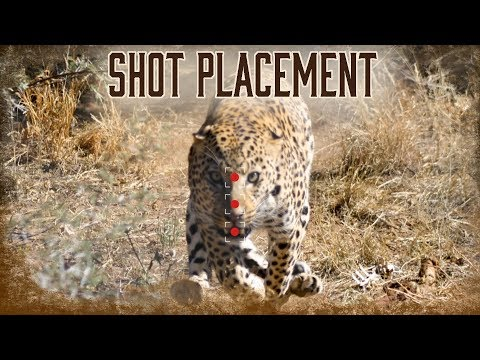 Shot Placement On Lions And Leopards | 9