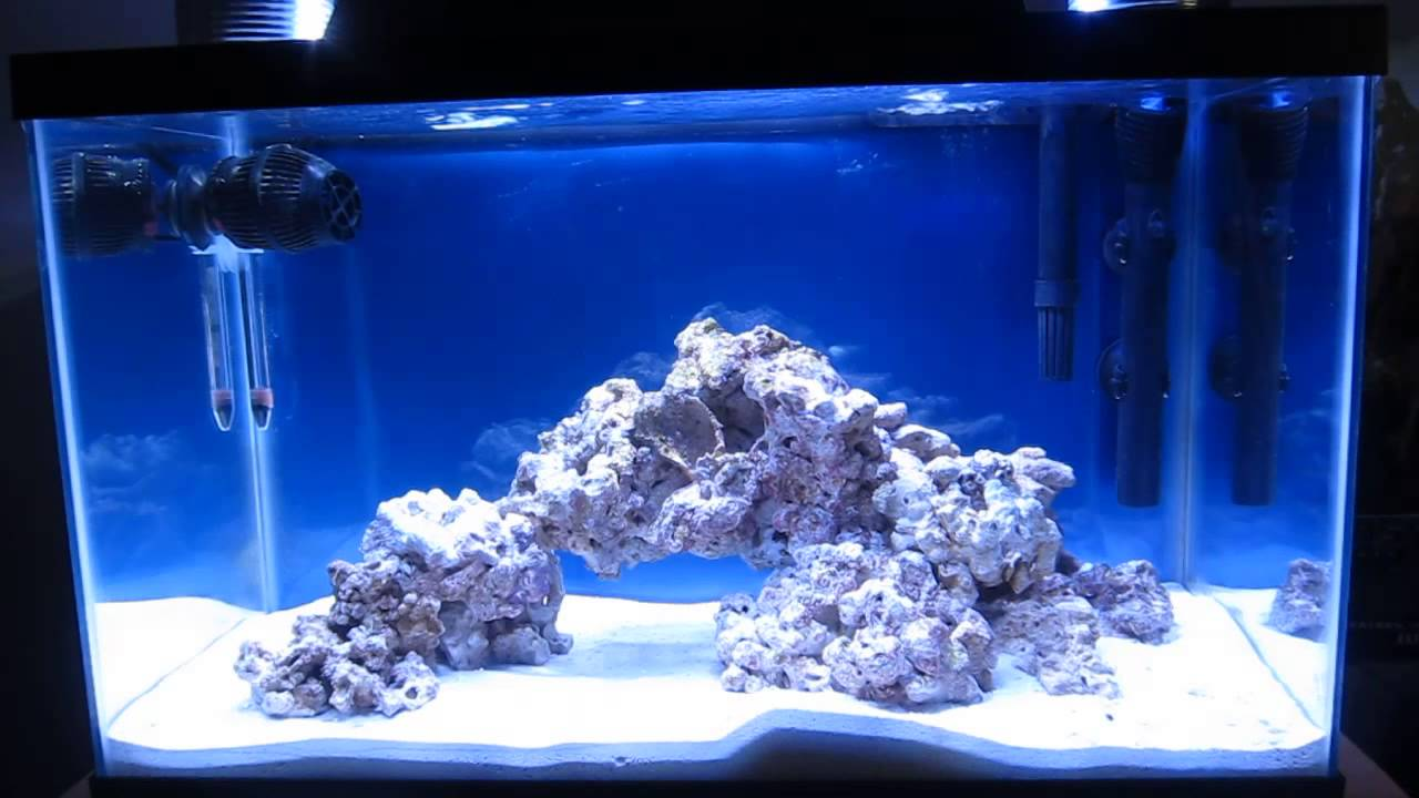 10 gallon saltwater fish tank images for Saltwater fish for 10 gallon tank
