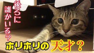 我が家の猫のお家芸。ホリホリをご覧ください。 thumbnail