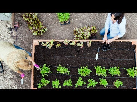Weekend DIY: How to Build a Raised Bed