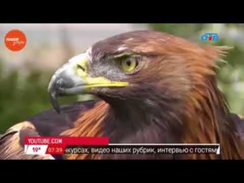 Наше УТРО на ОТВ – красная книга Южного Урала