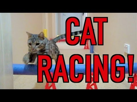 CAT RACING DAY