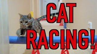CAT RACING DAY
