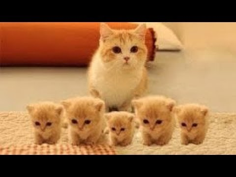 THE CUTEST LITTLE KITTENS VIDEO COMPILATION | Just Animal Videos