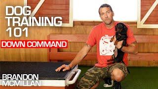 Dog Training 101: Down Command | Brandon McMillan