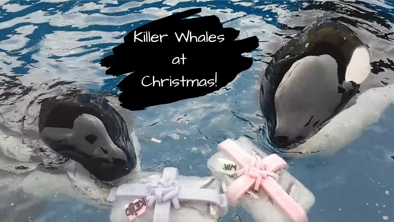 I Still Believe Author Celebrates Christmas With Beloved Orca Family in France