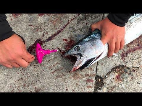 Ikejime, The Freshest Way To Eat Your Fish!