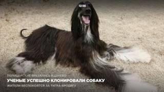 Ученые успешно клонировали собаку