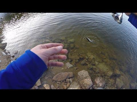 Gross Reservoir Fall Trout