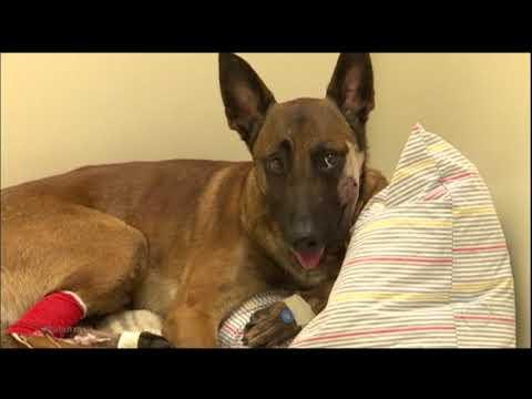 Cachorro baleado se recupera e comove população dos EUA