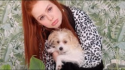 Everything you wanted (and didn't want) to know | Madelaine Petsch